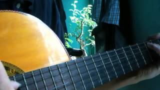 khi người yêu tôi khóc(guitar- flamencohuy).mp4