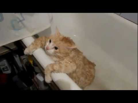 Картинка с обожравшимся котом