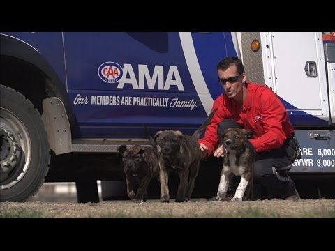 AMA Roadside Comfort Pet Program