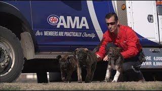 AMA Roadside Comfort Pet Program
