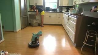 Прикольный кот катается на роботе-пылесосе