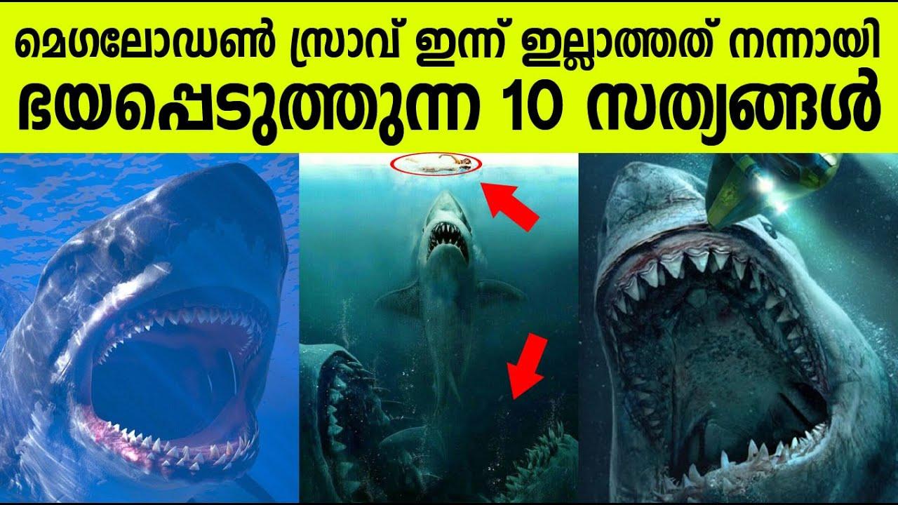 മെഗലോഡോൺ സ്രാവ് ! ഭയപ്പെടുത്തുന്ന 10 സത്യങ്ങള് ! Top 10 Facts about Megalodon Sharks!