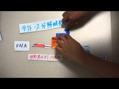 〔生物〕原核生物の遺伝子調節についてオペロン説を理解しよう