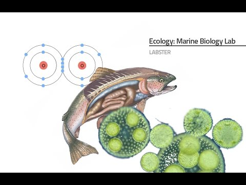 Labster Virtual Lab: Marine Biology Simulation
