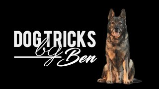 Ben the German Shepherd  7 years | Dog tricks