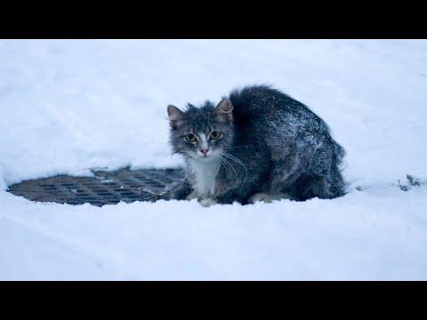 Породистую кошку выгнали из дома зимой. Она примерзла к сугробу и могла лишь жалобно звать на помощь