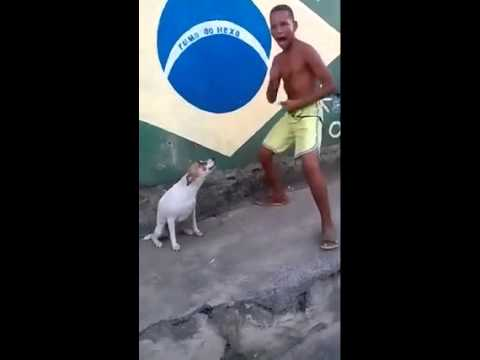 Funny Dog Dancing to Music