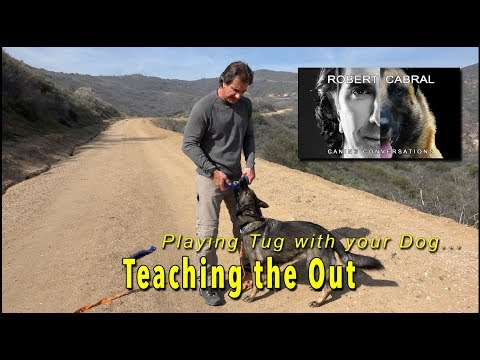 Tug Toy Training Part 3 - Outing the Toy - play with your dog
