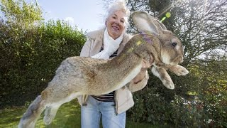Real Life EASTER BUNNY Caught On Camera