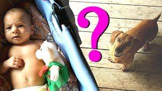 РЕБЁНОК И СОБАКА | Какие ПРАВИЛА нужно соблюдать если в доме НОВОРОЖДЕННЫЙ | польза собак для детей