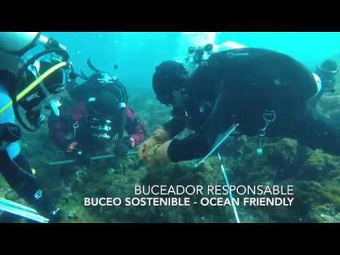 Underwater Life TV - Intro - Descubre el Buceo en la Azohia, Murcia