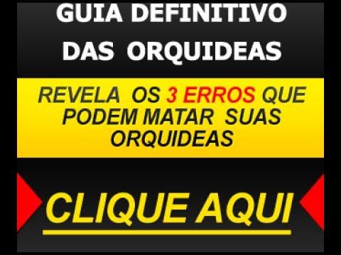 COMO CUIDAR DE ORQUIDEAS EPIFITAS