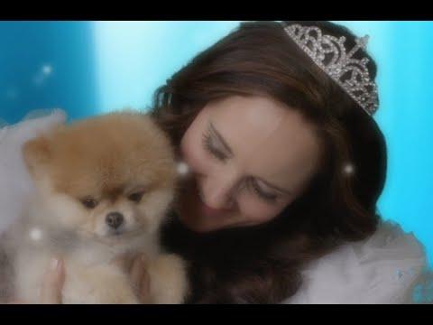 Cinderella - Magical Dog Wreaks Havoc on Blissful Princess - Jenny Oaks Baker