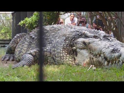 Один на всю планету — самые огромные животные в мире