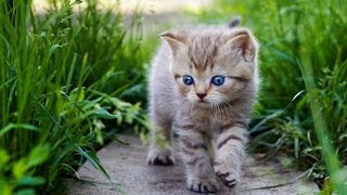 Kedi sahibi olmalıyım dedirten 10 neden