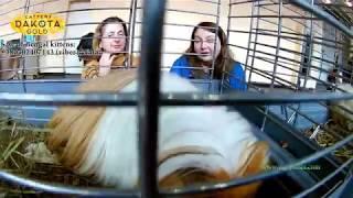 Выставка грызунов, Харьков, 04 марта, 2018, Радмир Экспохол, часть 3