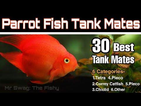 Parrot Fish Tank Mates | Top 30 Tank Mates | Parrot Fish K Sath Kon Kon Fish Rakh Sakte Hai