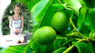 чудеса! Зелёные грецкие орехи в два счета вылечат щитовидную железу лучше любых лекарств