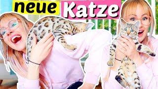 Ich bekomme eine Baby Katze 😍 Bengal Katze | ViktoriaSarina