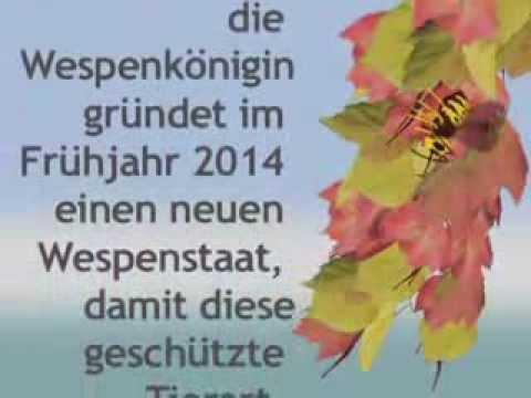 Wespen Im Rollokasten : ein wespennest im rolladenkasten youtube ~ Watch28wear.com Haus und Dekorationen
