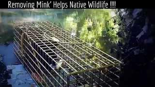 otter mink water vole fox badger darren harries carmarthenshire wildlife watch wewildlifewatch it