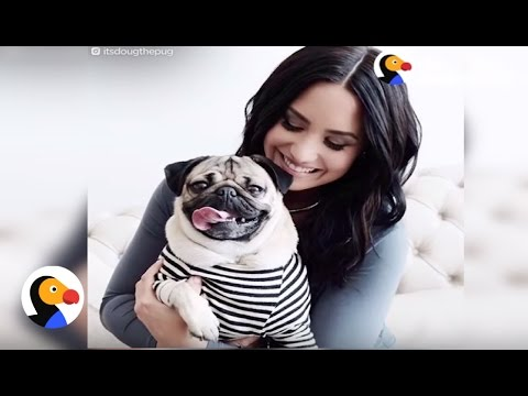 Doug the Pug Hangs with Justin Bieber, Ed Sheerhan, Chrissy Teigen & More | The Dodo