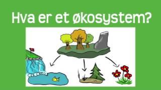 Økosystem og suksesjon SÅ LETT AT SELV DU KAN SKJØNNE DET