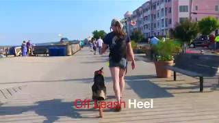 """German Shepherd Puppy """"Charlee"""" Learns dog obedience with Off Leash K9 Training, Maryland"""