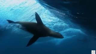 Ajda Pekkan - Cool Kadın (Mahmut Orhan Remix) Video