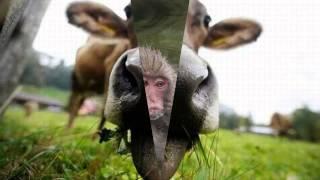 смешные фотки животных, видео приколы с животными.