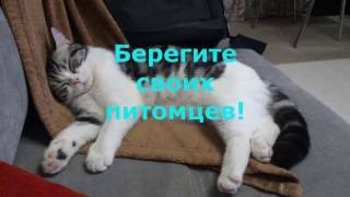 Котам и кошкам противопоказан алкоголь