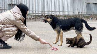 Дворняга Укусила Меня Кормим Бездомных собак и кошек