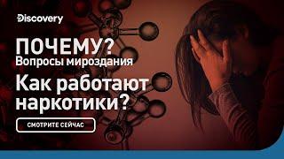 Как работают наркотики   Почему? Вопросы мироздания   Discovery