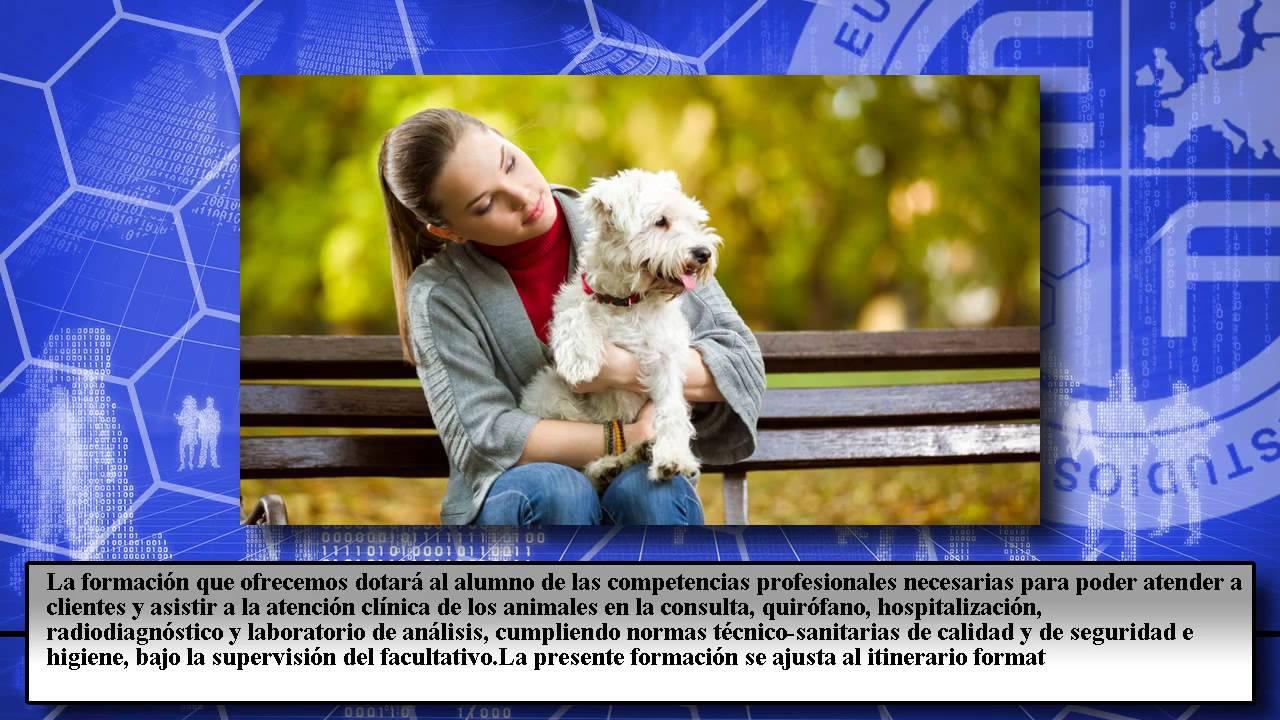 San488_3 Asistencia A La Atencion Clinica En Centros Veterinarios A ...