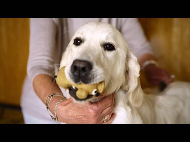 Voordeel 3: een gelukkige moederhond