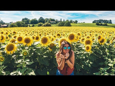 BEST SUNFLOWER field in SWITZERLAND! (Geneva)