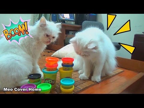 Best Funny Cats Compilation 2017 Part II | Funny Cat Vines 2017 | Meo Cover Home