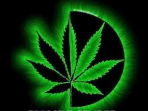 cannabis sativa cartel de santa