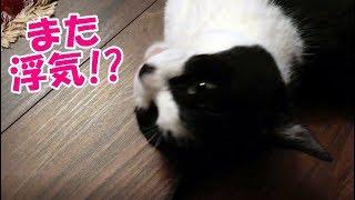 保護猫サロンohana(NPO法人LYSTA)さんのYoutubeチャンネルはこちら^^ ↓↓...