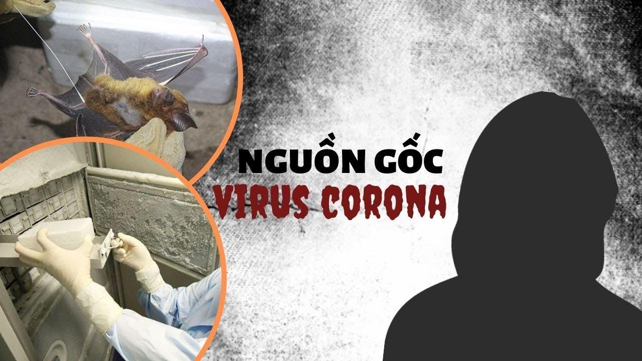 Virus corona từ đâu mà ra: Dơi, quạ hay phòng thí nghiệm ở Vũ Hán?