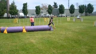 Siddalee Open Jumpers German Shepherd Club Of Oregon
