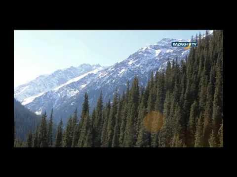 Снежный барс в Казахстане.