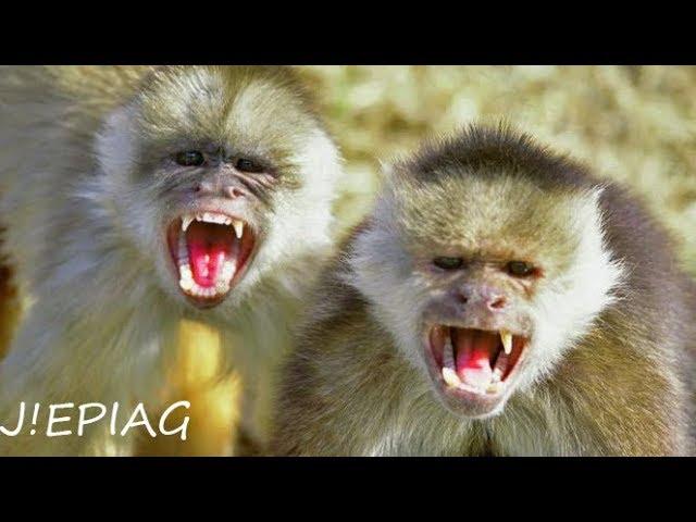 Жестокое нападение обезьяны на человека | МАЛАЙЗИЯ  | Пещеры БАТУ  | СМОТРЕТЬ ВСЕМ =D