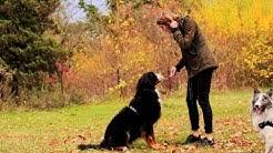 Leinentausch.de - Liebevolle Hundebetreuung in Privathaushalten