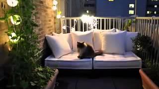 Small Balcony Garden Ideas I Kleiner Balkon Garten Ideen