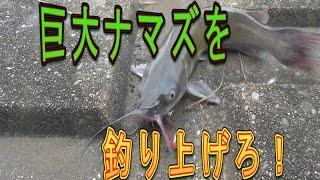 巨大ナマズを釣り上げろ【アメリカナマズ】 thumbnail