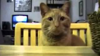 חתולנובלה פרק 4
