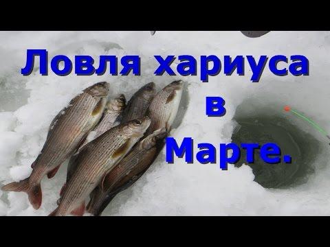 зимняя рыбалка на байкале ленок хариус