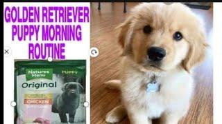 Golden Retriever Dog Breed Puppy #goldenretriever