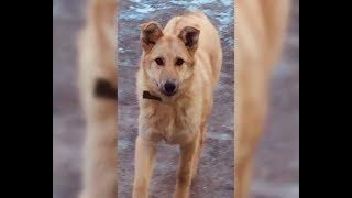 Бездомная волгоградская собака Малявка обрела свое счастье в Анапе